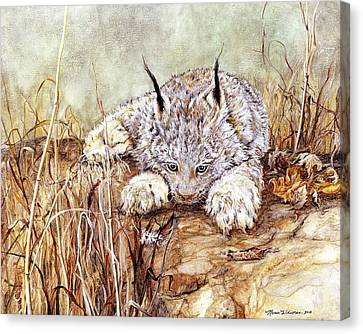Bobcat Kittens Canvas Print - Missed Lunch by Nonie Wideman