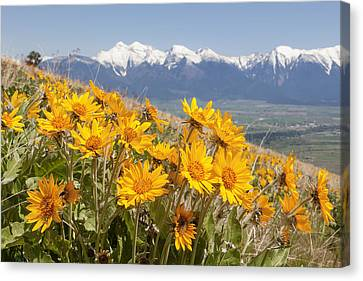 Mission Mountain Balsam Blooms Canvas Print by Jack Bell