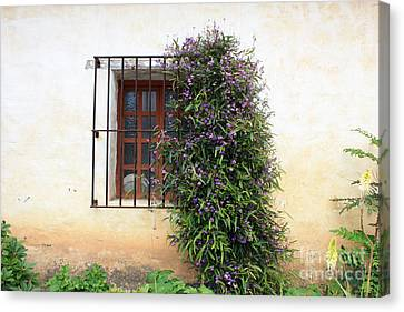 Mission Window With Purple Flowers Canvas Print by Carol Groenen