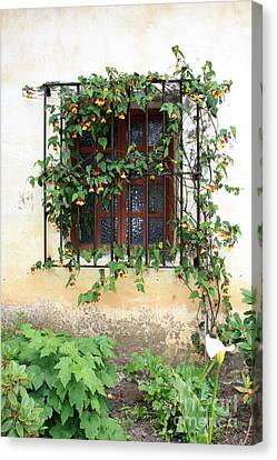 Mission Window With Yellow Flowers Vertical Canvas Print by Carol Groenen