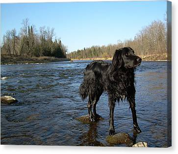 Canvas Print featuring the photograph Mississippi River Dog On The Rocks by Kent Lorentzen