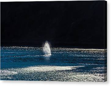 Blowhole Canvas Print - Mist From A Gary Whale by Garry Gay