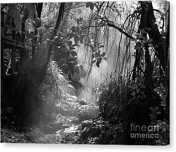 Mist In The Jungle Canvas Print