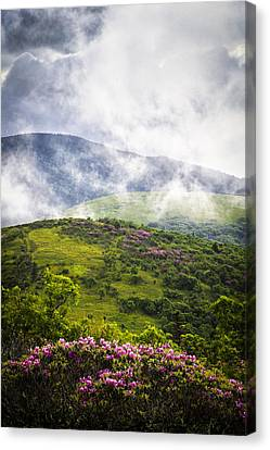 Rhododendrons - Roan Mountain Canvas Print
