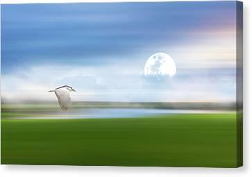 Mist On The Bayou Canvas Print