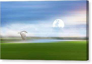 Mist On The Bayou Canvas Print by Georgiana Romanovna