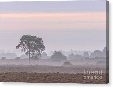 Mist Stripes New Forest Canvas Print by Richard Thomas