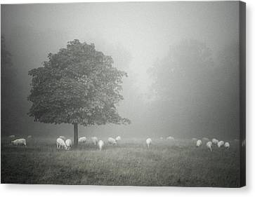Misty And Muted Canvas Print by Chris Fletcher