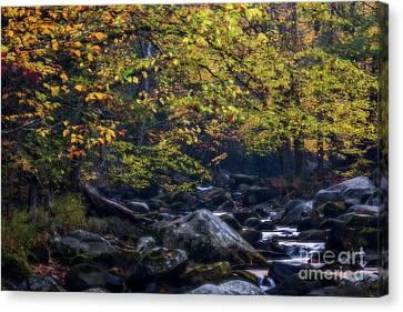 Misty Autumn Stream Canvas Print by Doug Sturgess