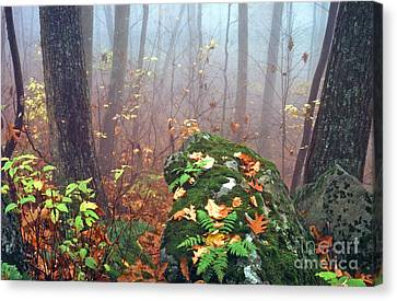 Misty Autumn Woodland Canvas Print by Thomas R Fletcher