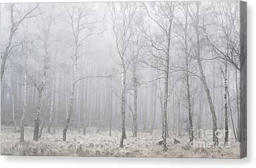 Misty Birch Wood Canvas Print by George Wheelhouse