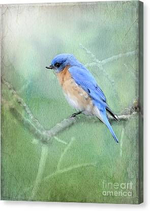 Canvas Print featuring the photograph Misty Blue by Betty LaRue