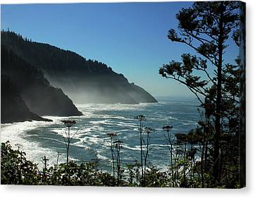 Misty Coast At Heceta Head Canvas Print