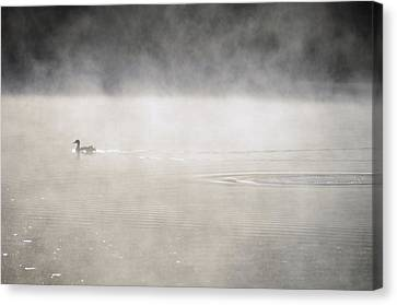 Misty Duck Canvas Print