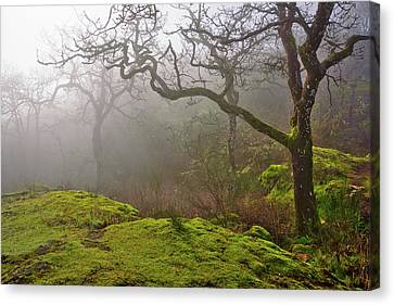 Misty Forest Canvas Print by Keith Boone
