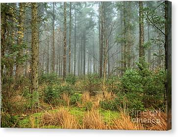Canvas Print - Misty Forest With Sunshine by Patricia Hofmeester