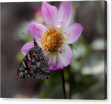 Misty Garden Butterfly Canvas Print by Paul Slebodnick
