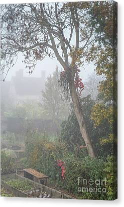 Misty Garden, Great Dixter 2 Canvas Print by Perry Rodriguez