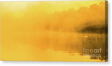 Misty Gold Canvas Print