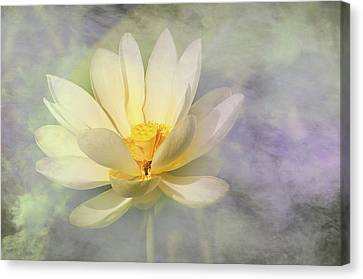 Canvas Print featuring the photograph Misty Lotus by Carolyn Dalessandro