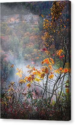 Misty Maple Canvas Print by Diana Boyd