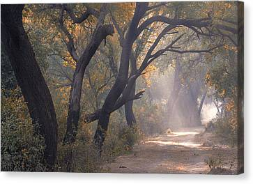 Canvas Print featuring the photograph Misty Morning, Bharatpur, 2005 by Hitendra SINKAR