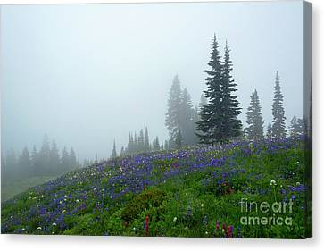 Misty Morning Meadow Canvas Print by Mike Dawson