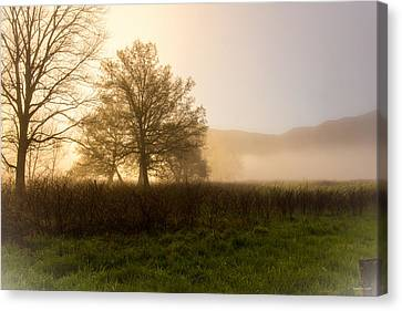 Misty Morning Canvas Print by Rebecca Hiatt