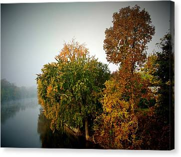 Misty Morning Shoreline Trees Canvas Print by Rory Cubel