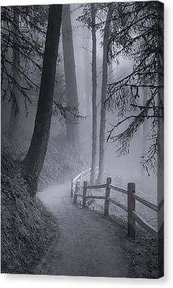 Misty Morning Trail Canvas Print