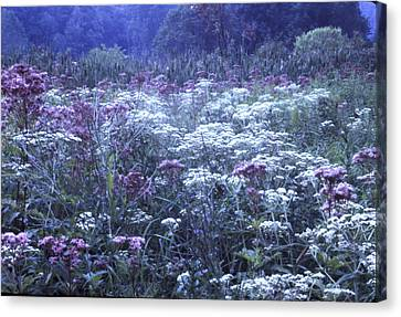 Misty Morning Wildflowers 3 Canvas Print