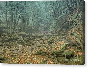 Misty Morning Woodscape Four Canvas Print