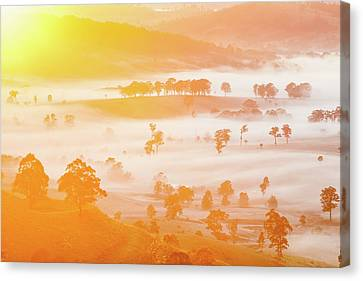 Wine Scene Canvas Print - Misty Mornings by Az Jackson