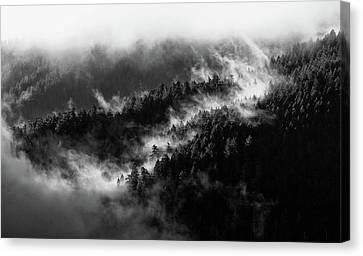 Canvas Print featuring the photograph Misty Mountain Pines by Michael Hope