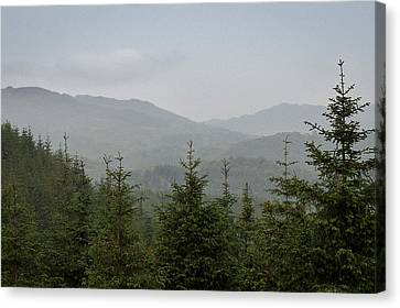 Boars Canvas Print - Misty Pine Forests by Chris Dale