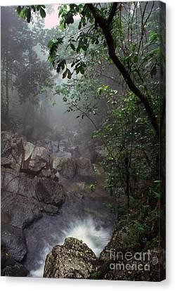 Misty Rainforest El Yunque Mirror Image Canvas Print by Thomas R Fletcher