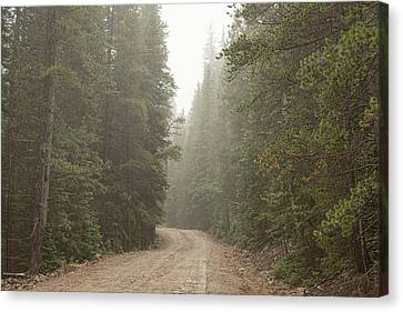 Canvas Print featuring the photograph Misty Road by James BO Insogna