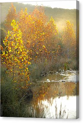 Misty Sunrise At Lost Maples State Park Canvas Print