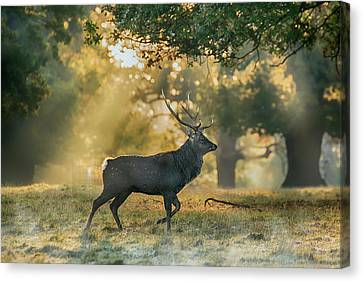 Canvas Print featuring the photograph Misty Walk by Scott Carruthers