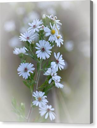 Misty Wildflowers Canvas Print by Maria Urso