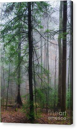 Canvas Print featuring the photograph Misty Winter Forest by Thomas R Fletcher
