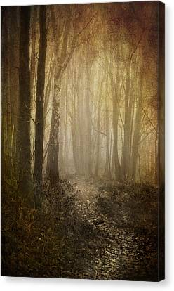 Misty Woodland Path Canvas Print by Meirion Matthias
