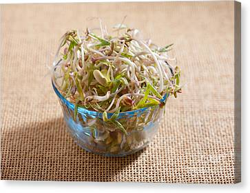Mix Of Fresh Plant Sprouts Growing In Glass Bowl  Canvas Print by Arletta Cwalina