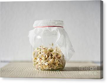 Mix Of Fresh Sprouts Growing In Glass Jar  Canvas Print by Arletta Cwalina