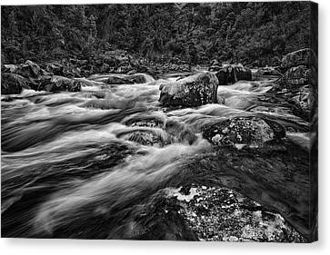 Mixed Emotions Canvas Print by Mark Lucey