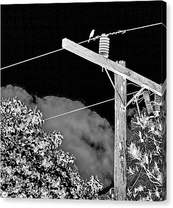 Mockingbird On A Wire Canvas Print