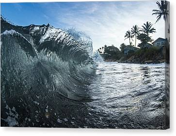 Mohawk Curl  -  Part 1 Of 3 Canvas Print by Sean Davey