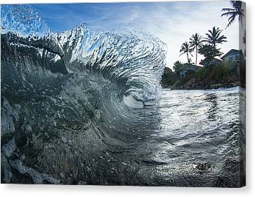 Mohawk Curl  -  Part 2 Of 3 Canvas Print by Sean Davey