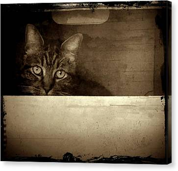 Mollie In A Box Canvas Print by Patricia Strand