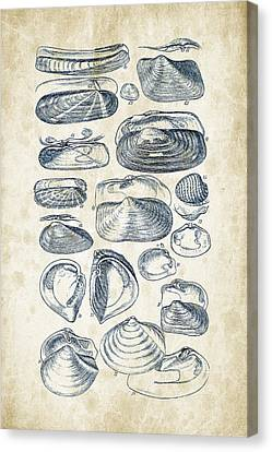 Mollusks - 1842 - 03 Canvas Print by Aged Pixel
